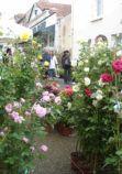 marche-aux-fleurs-3